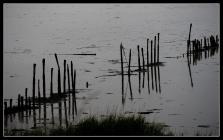 Rømø in Rain