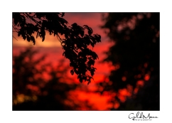 Fire in the skies 4